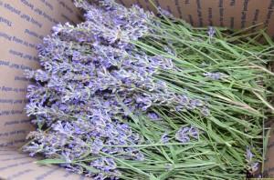 lavender tower - harvest lavender sprigs #hertoolbelt