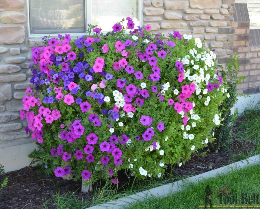 Pallet planter box for cascading flowers her tool belt 7 sept 22 wave petunia pallet flower box ccuart Choice Image