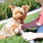 Tool Review: Dremel Pet Nail Grooming Kit