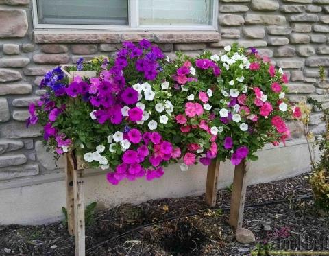3 June 6 cascading flowers